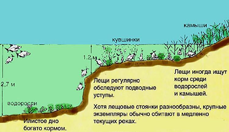 картинка лов леща на малой реке